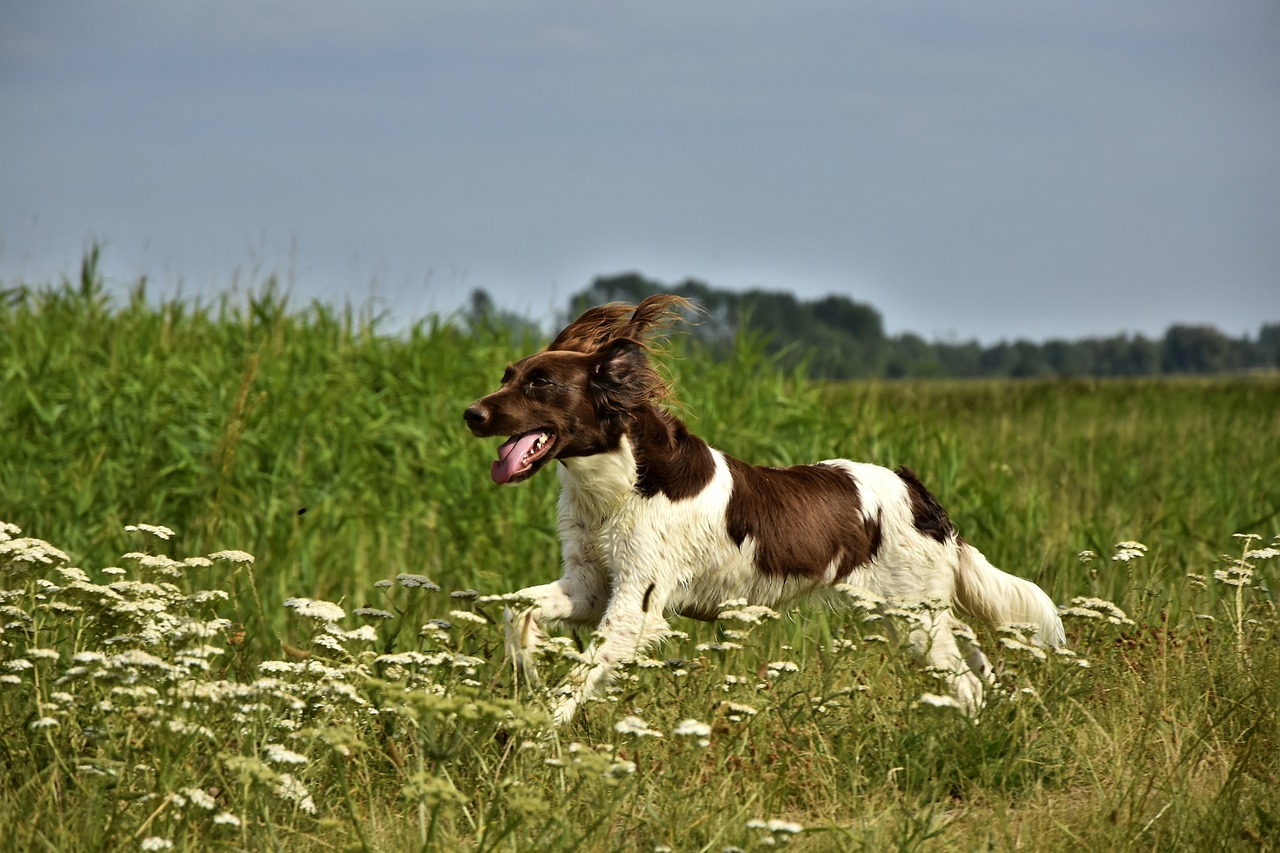 A dog is bounding through a green field of grass and flowers