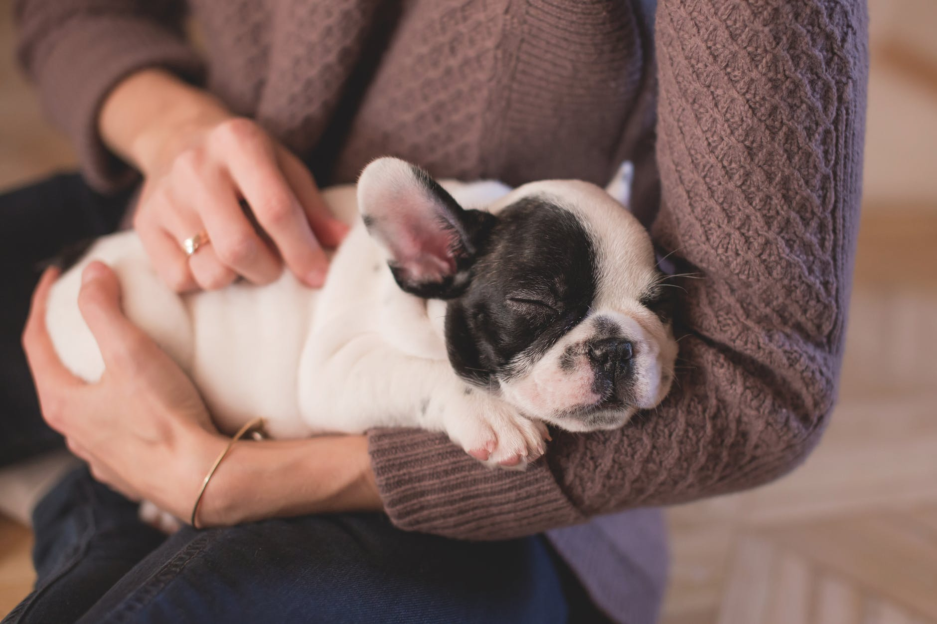 a woman holding and petting a black and white french bulldog puppy