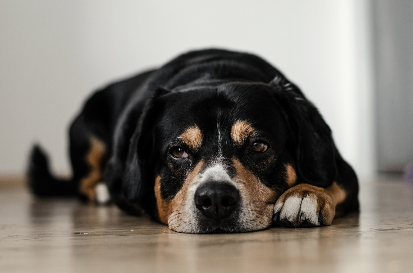 Symptoms of An Infected Dog Wound Every Owner Should Know