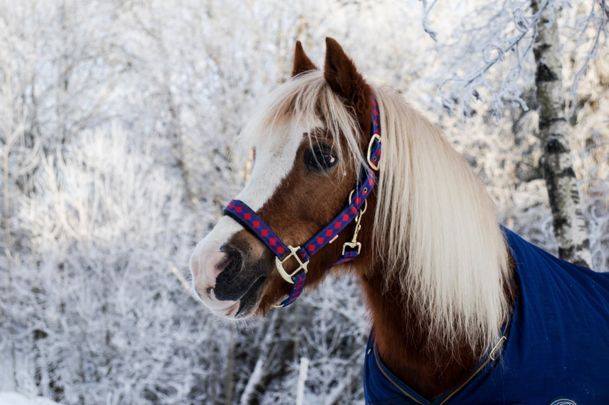 How You Can Provide the Best Winter Care for Your Horse
