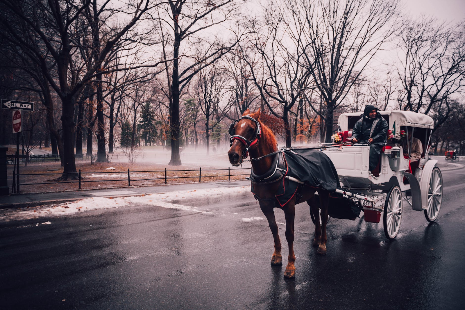 A horse pulling a white carriage in a wintery scene