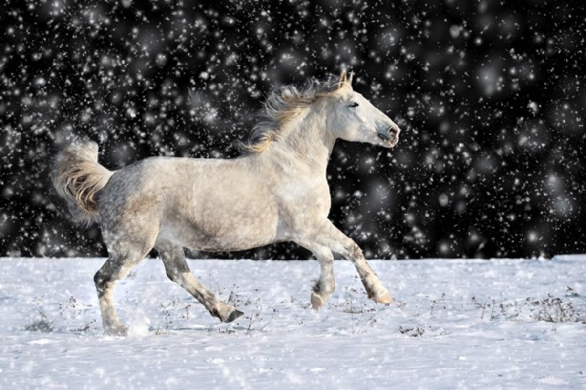 A white horse prancing in a snowy field