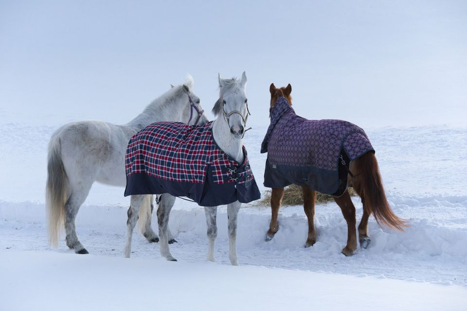 Three horses standing in the snow with two of them wearing plaid covers