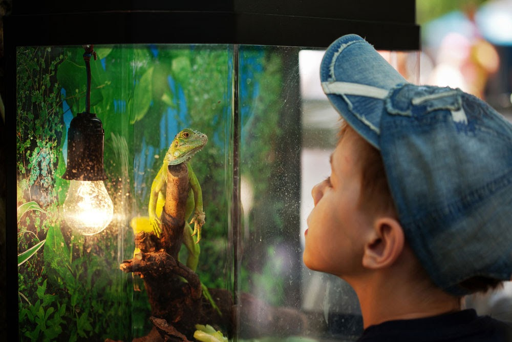 Young boy looks into a terrarium at a gecko