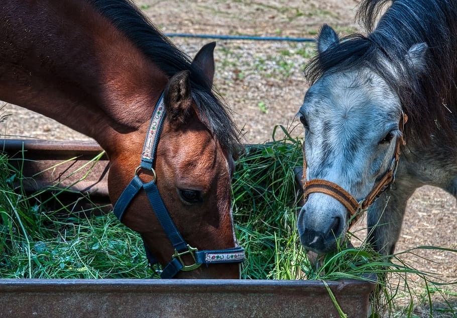 Two horses eating grass out of a trough