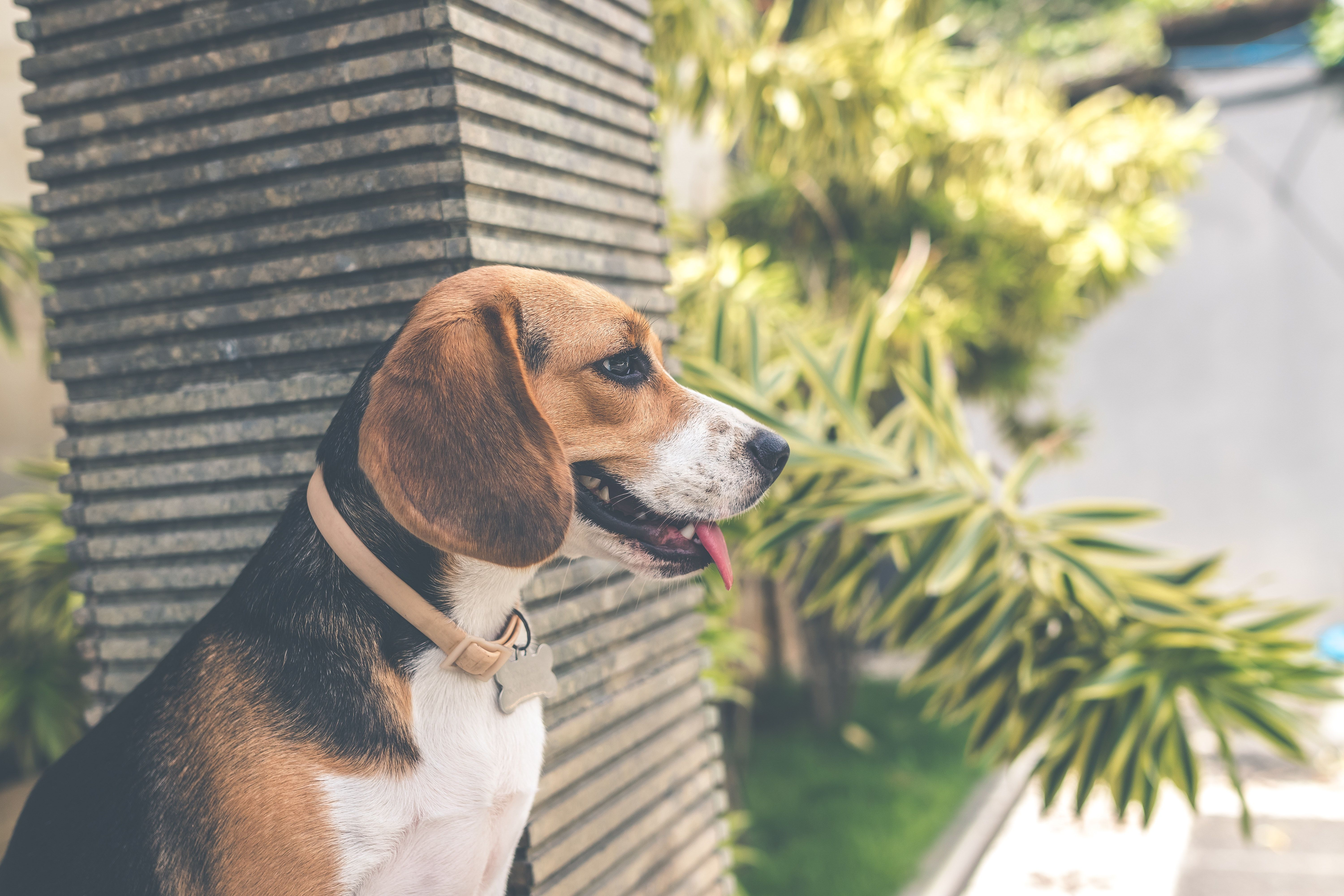 Plants That Can Make Your Dog Sick