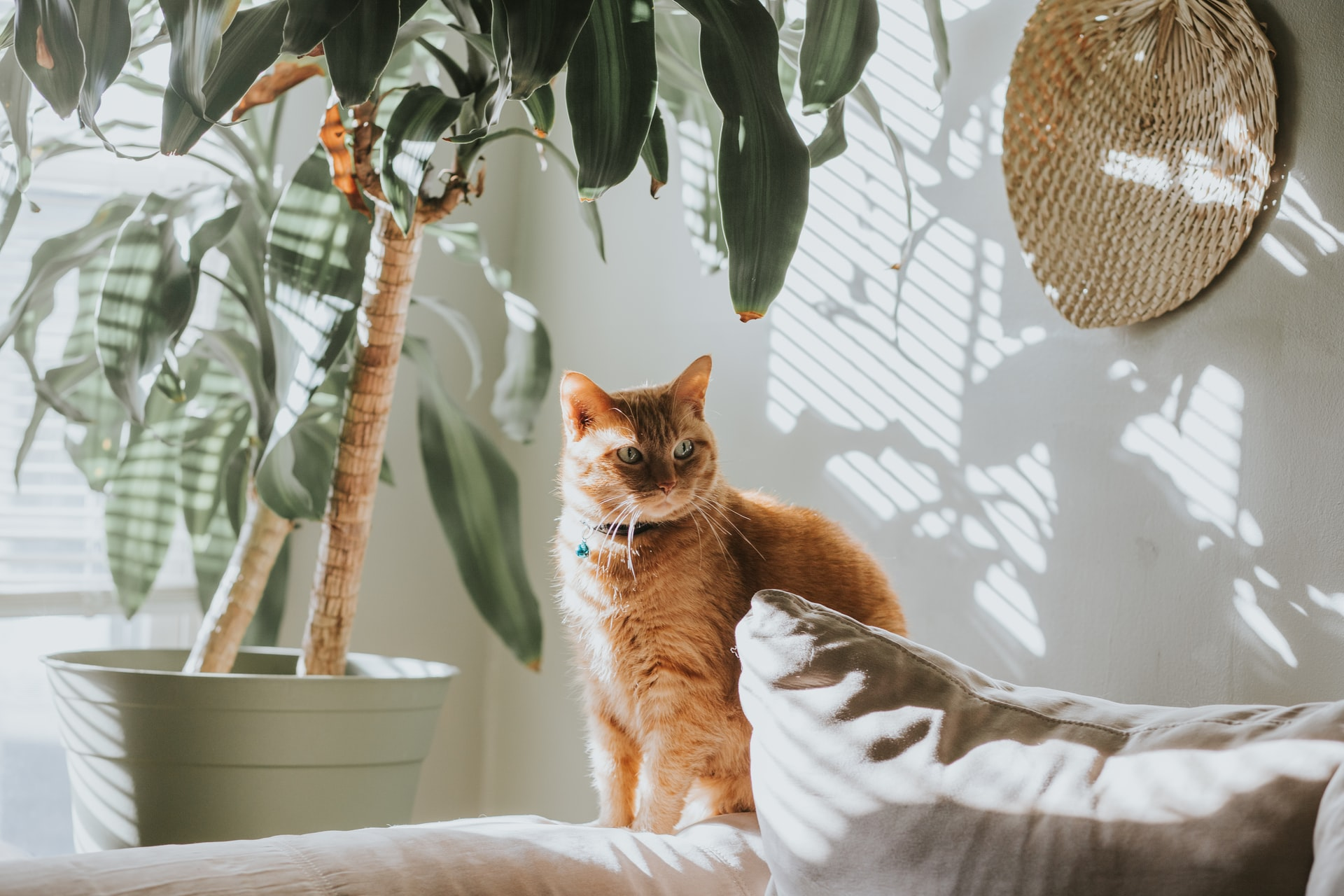 an orange cat sitting beside a houseplant in an apartment