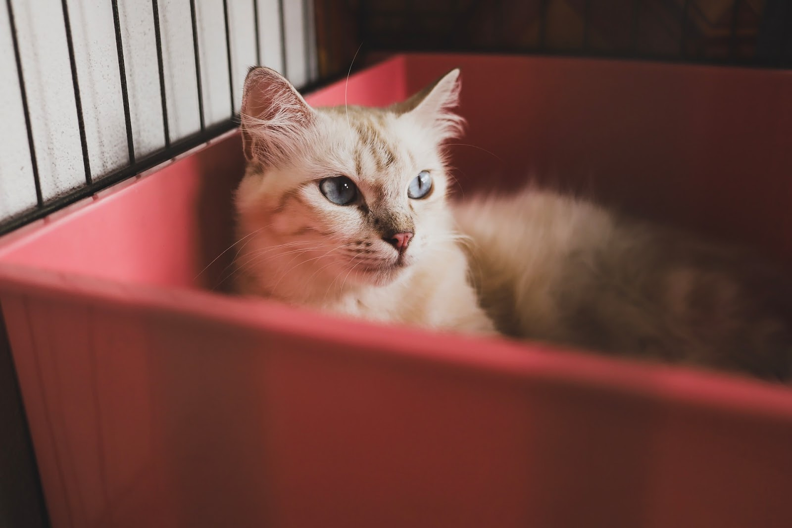A blonde cat is laying down in a plastic red bin