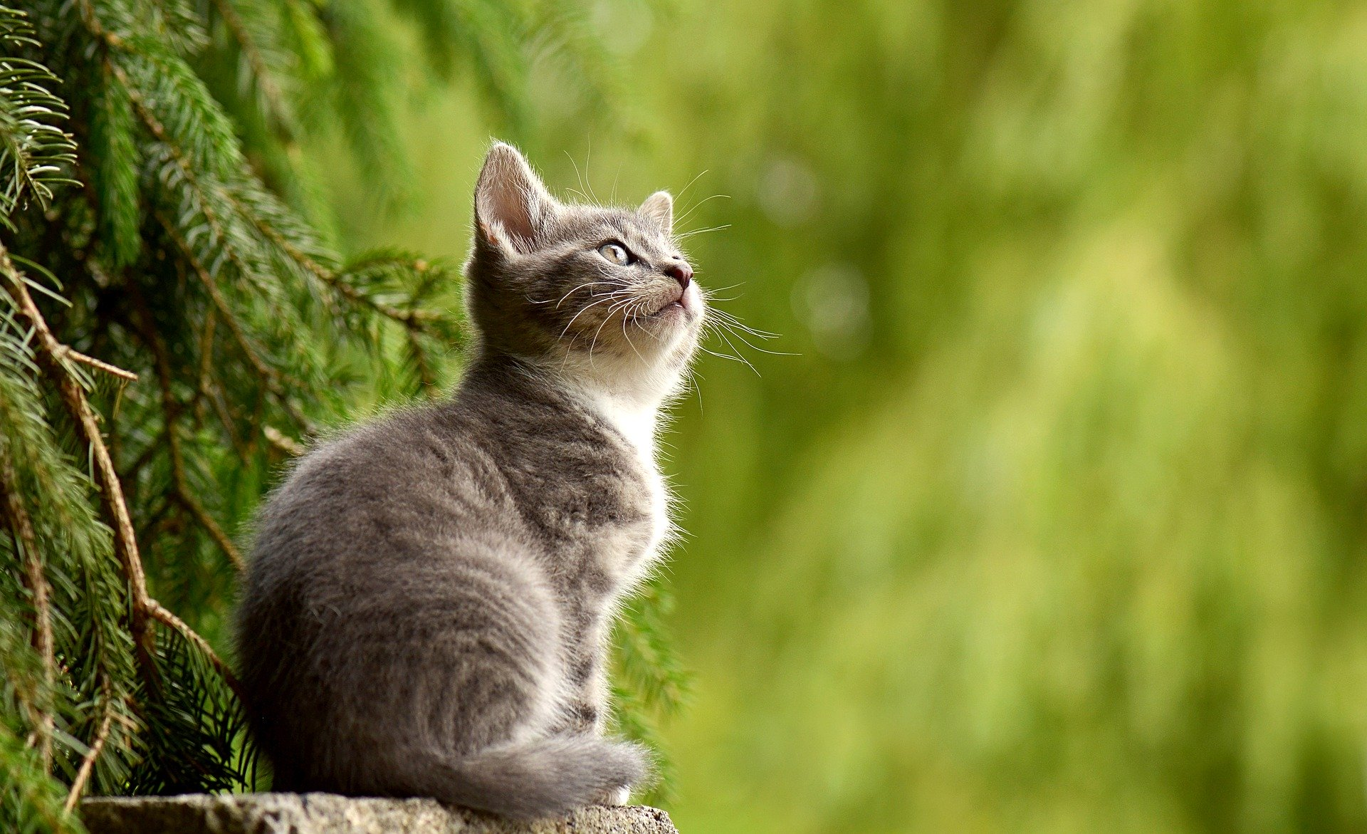 Plants that can Make Your Cat Sick and Ones that are Safe for Your Feline Friend