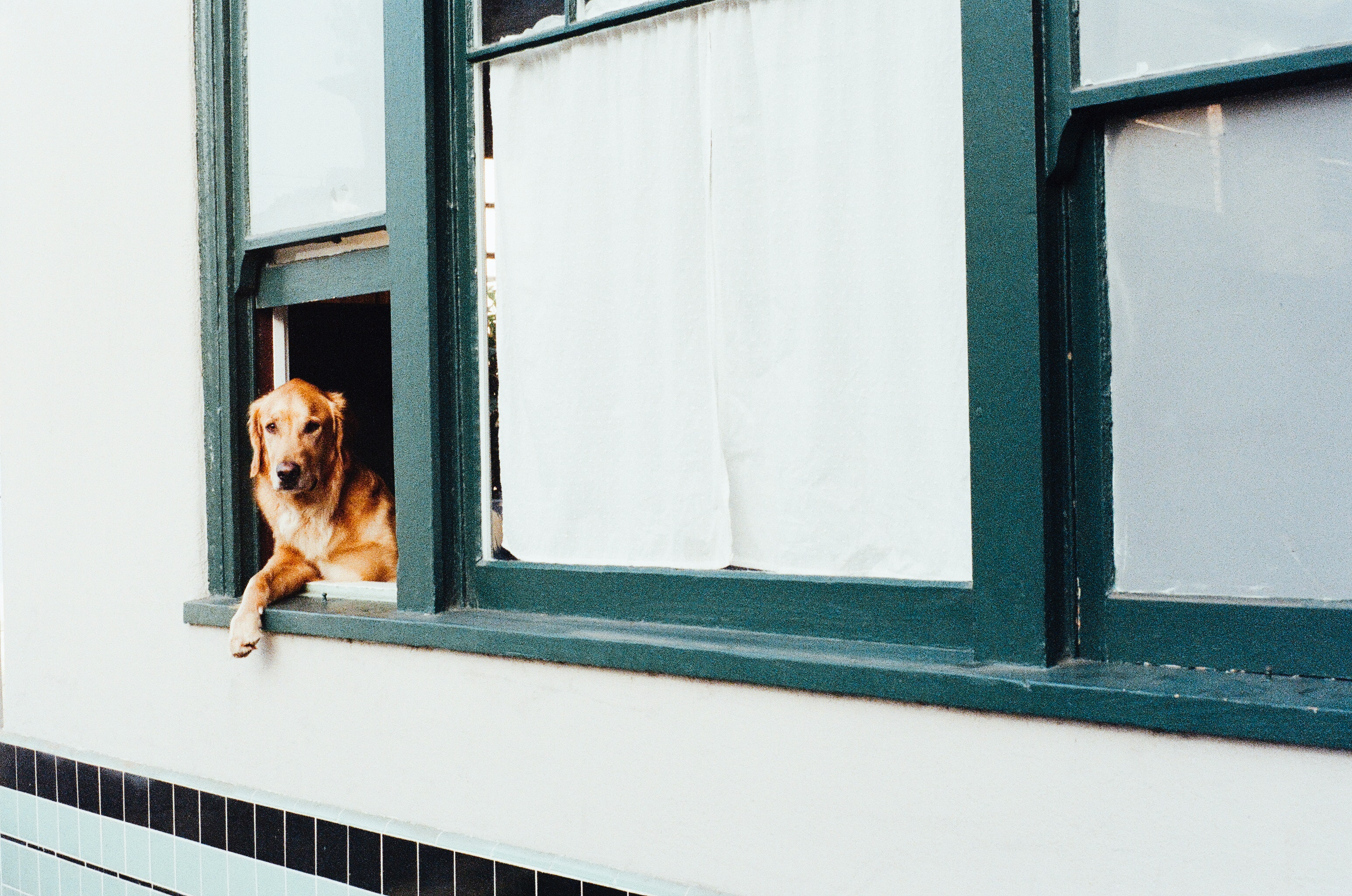 Tips for Successfully Owning a Dog in an Apartment