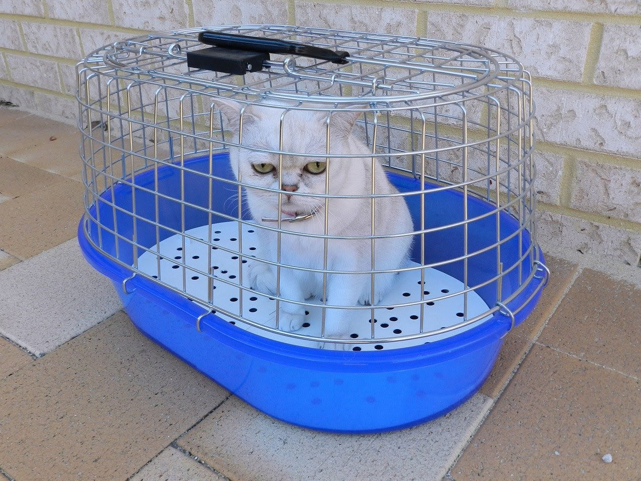 A white cat inside a carrier