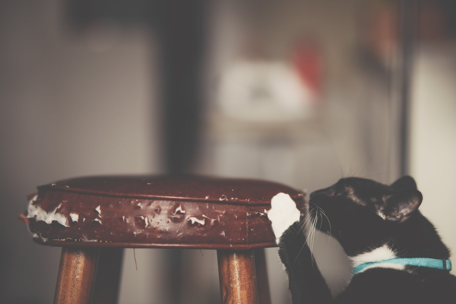 A black and white cat scratching a leather stool