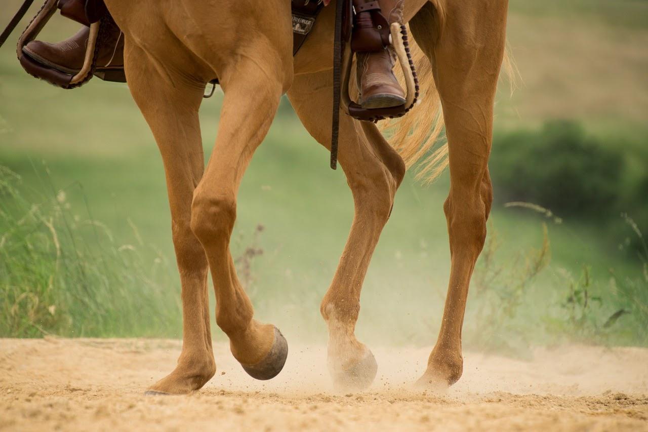 A person rides a healthy horse through a field.