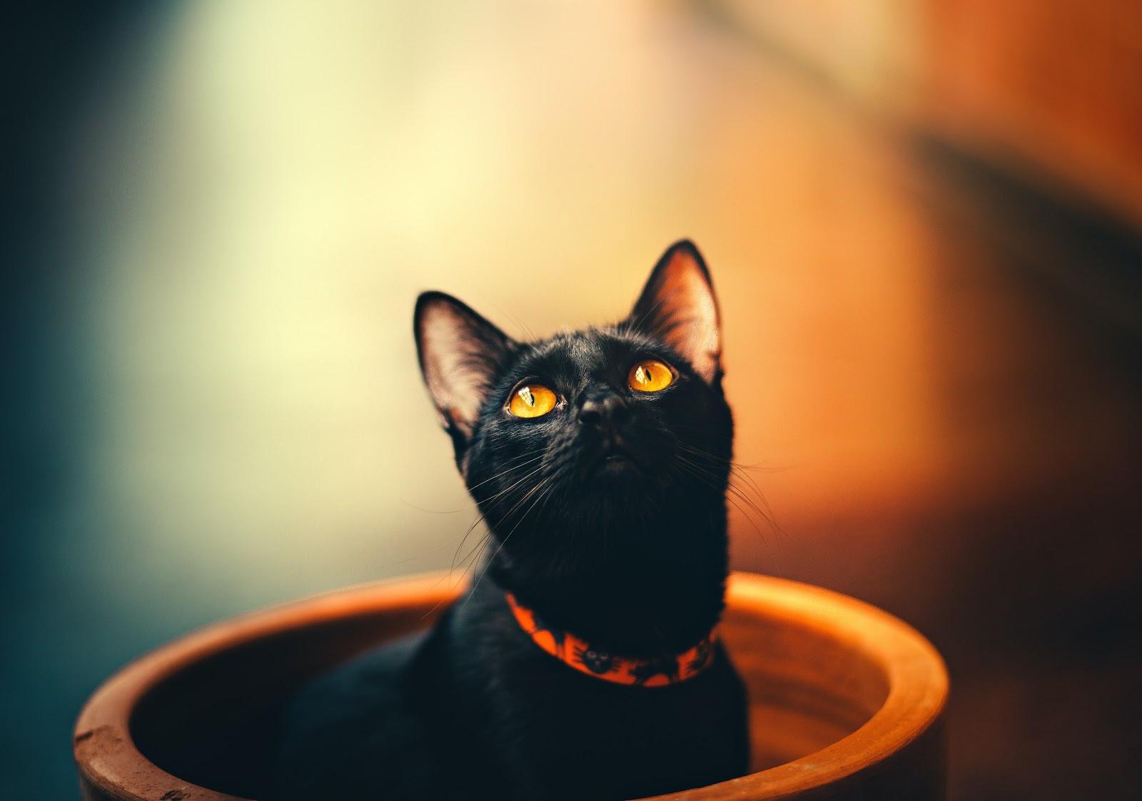 A kitten sitting in a pot looking upward