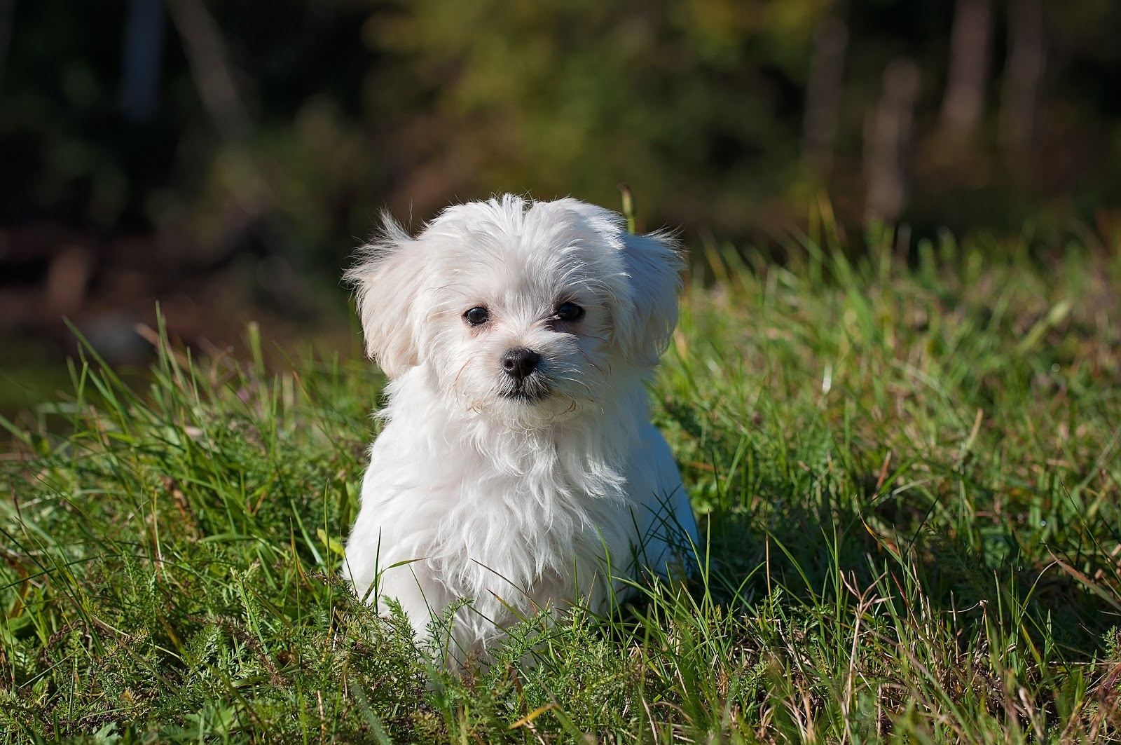 Small white dog in the grass