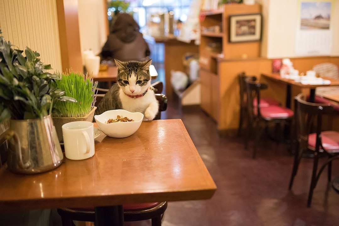 An adopted cat sits at a restaurant table with a bowl of food on the table.