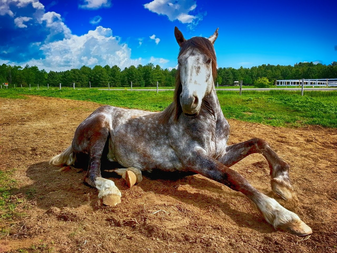 A horse sitting in a field
