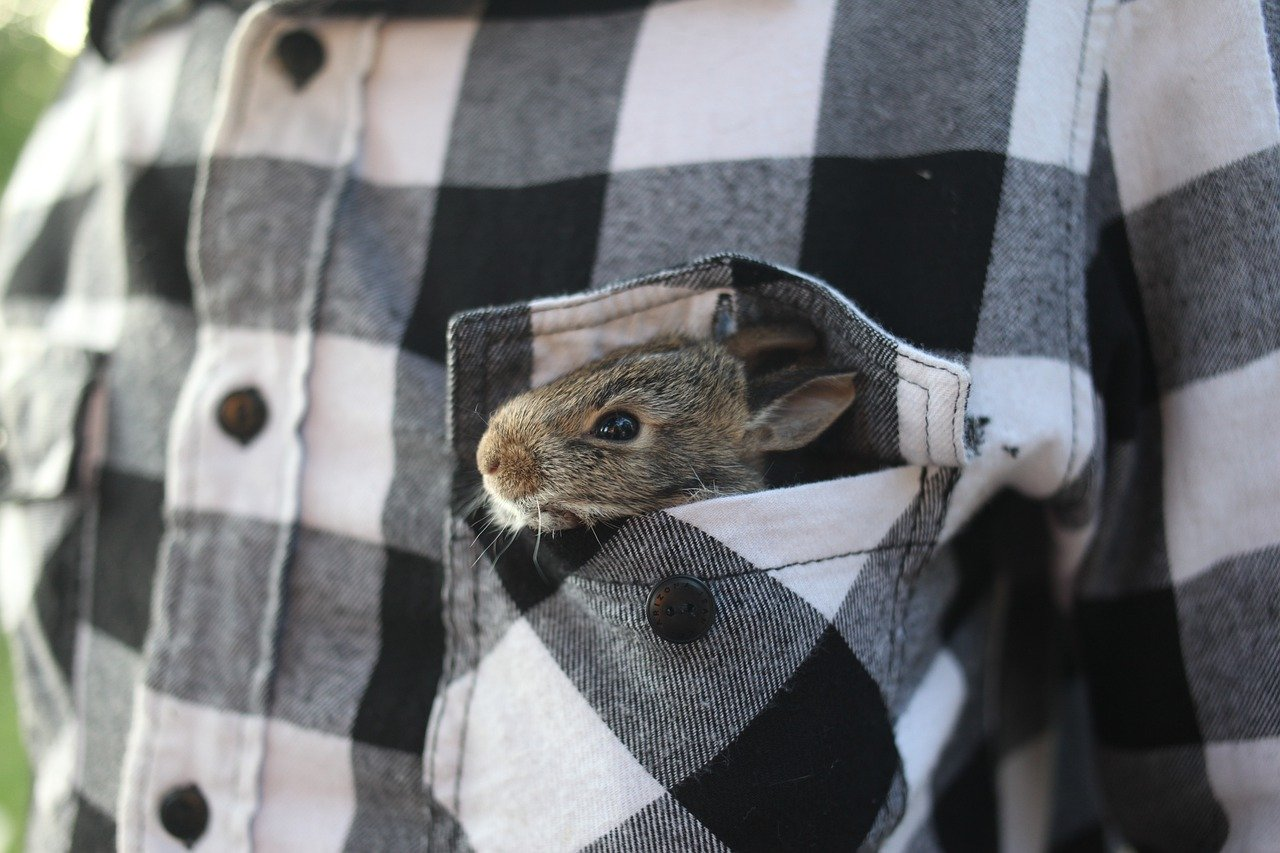an adopted bunny sticking out of the breast pocket of a man's flannel shirt