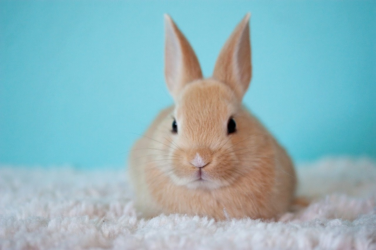 A bunny on a blanket