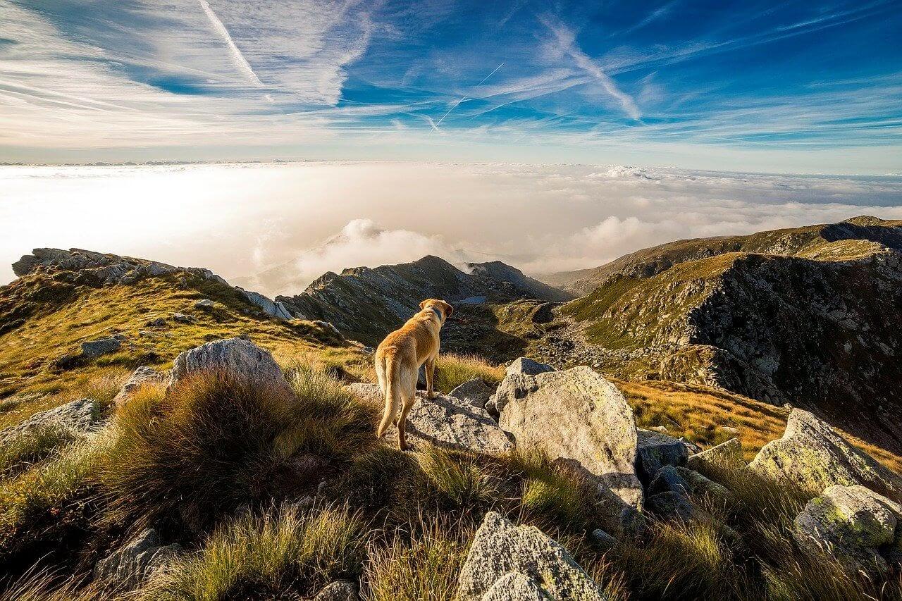 A dog walks on rocks outside.