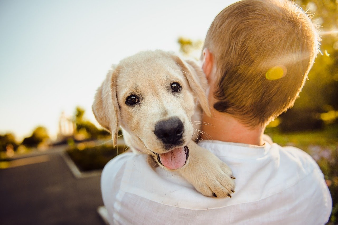 A dog looks over the shoulder of the person holding him.