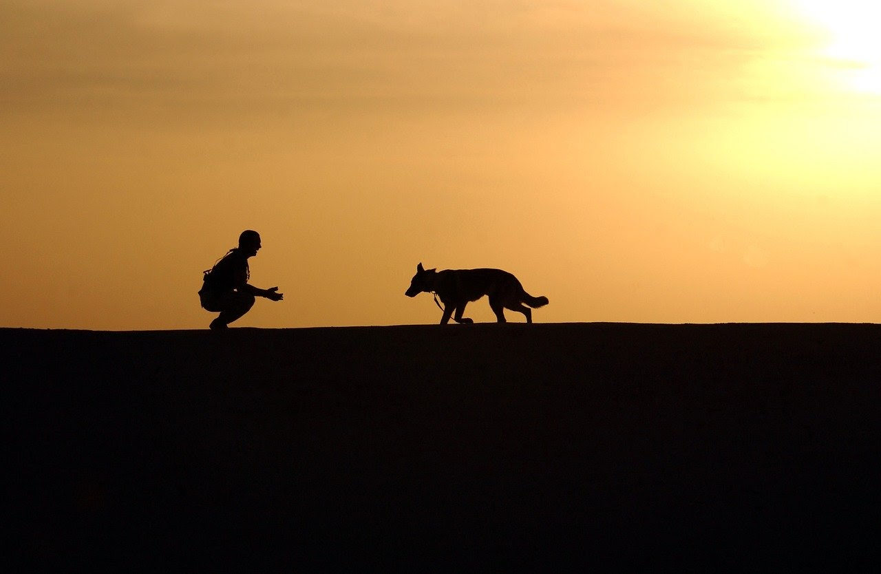 A dog runs towards a human in front of a sunset.