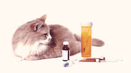 A cat sits next to an array of medicines.