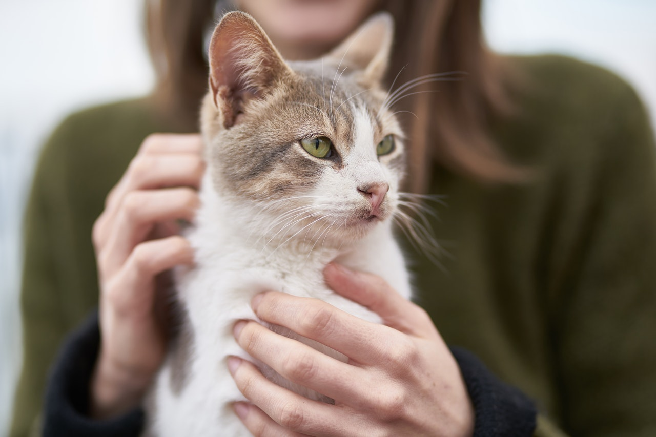 a woman in a green sweater petting a small white cat