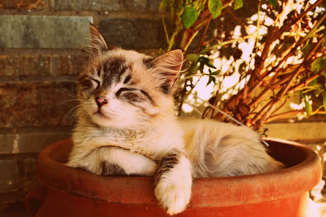 A cat without dander sleeping in a flower pot.