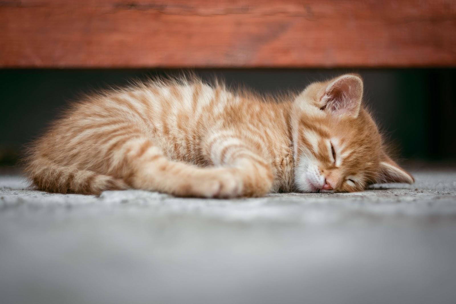 A kitten sleeping soundly on carpet.