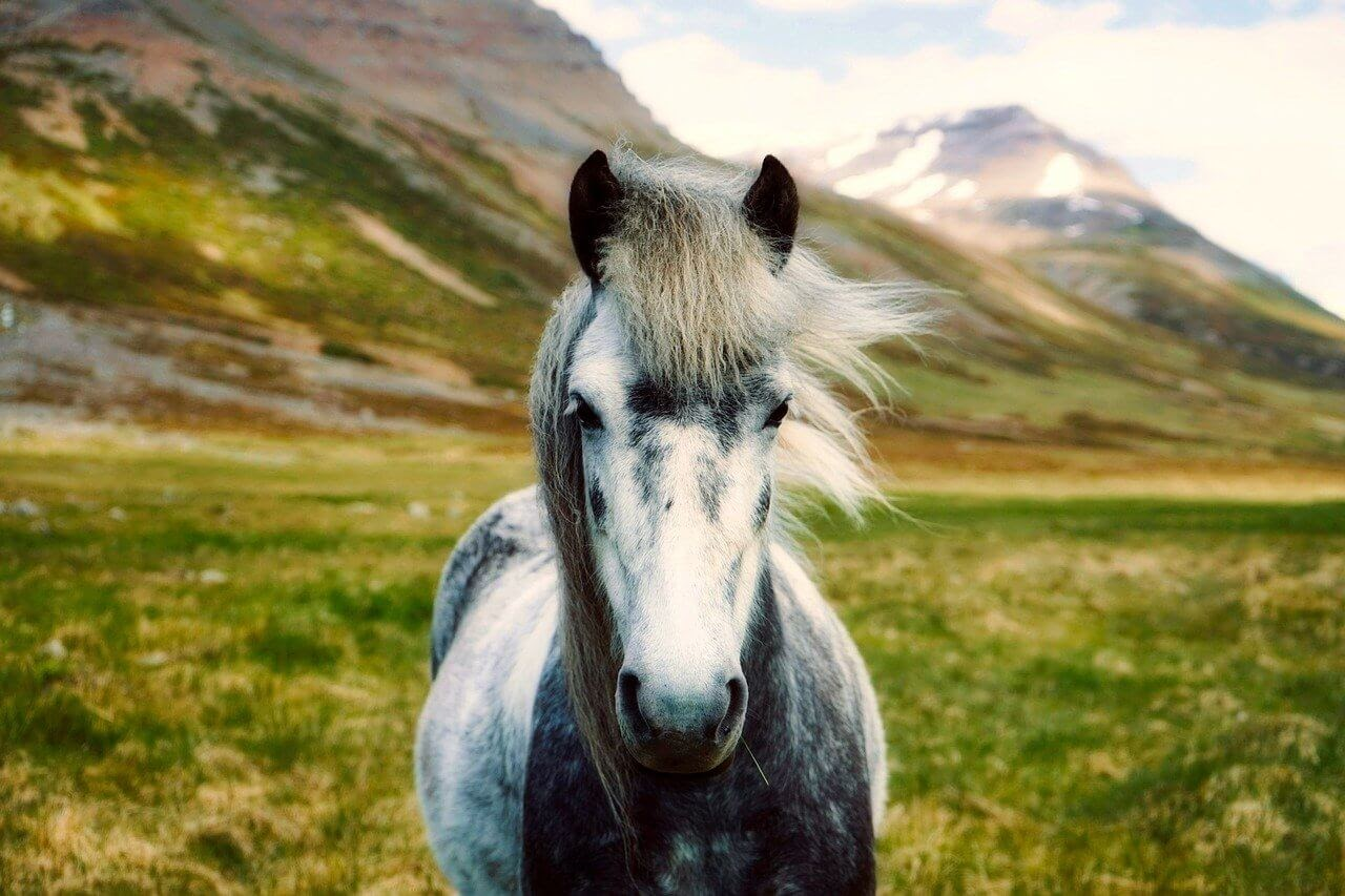 A white horse stands in a field in front of mountains.