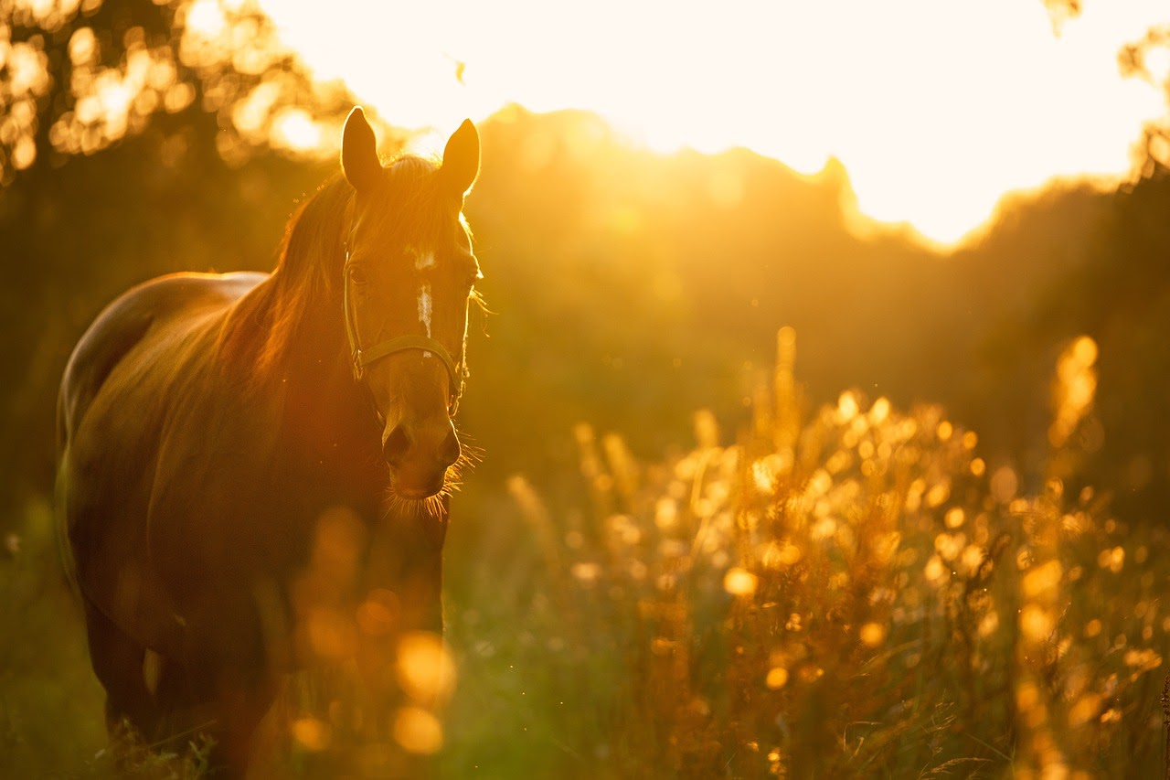 A horse runs towards the camera at sunset.