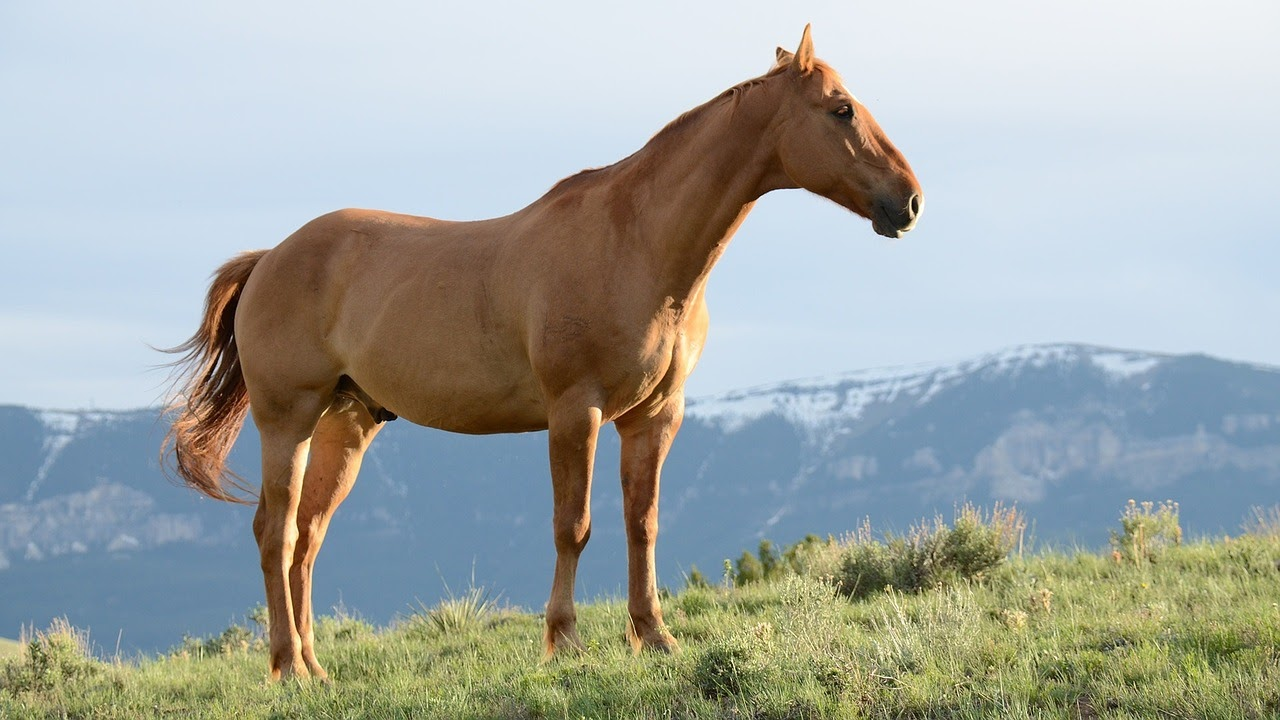 A brown horse standing in a field in front of a mountain.