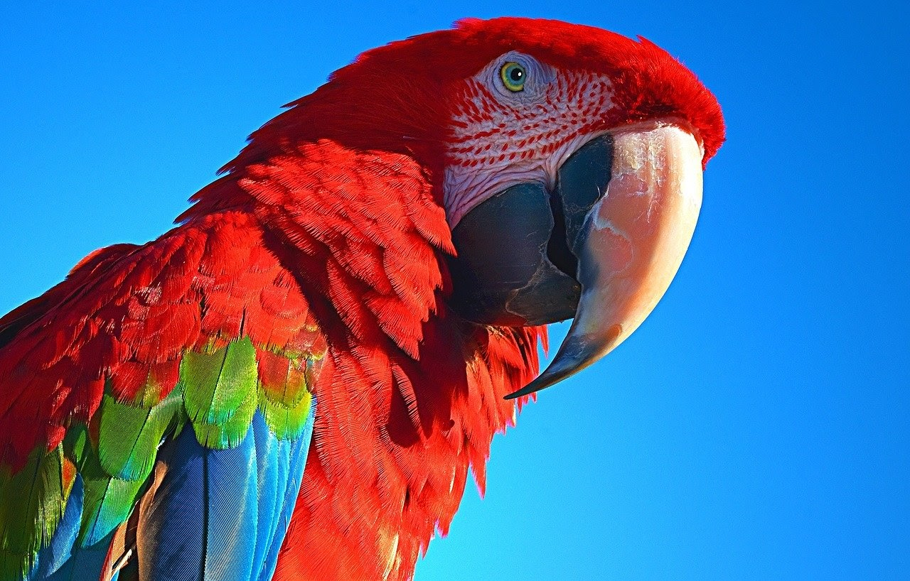 A parrot with colorful feathers