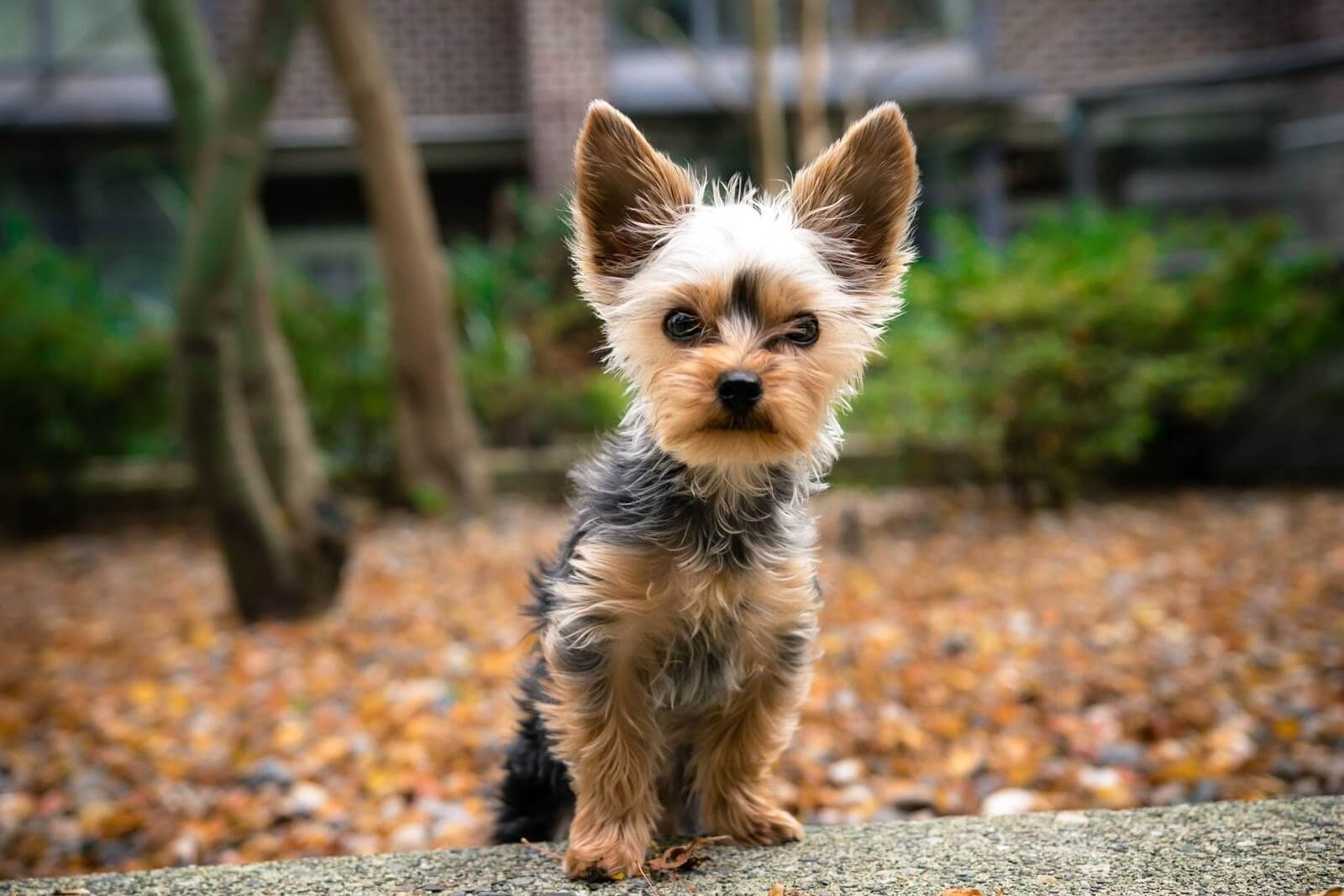 A small dog outdoors in autumn