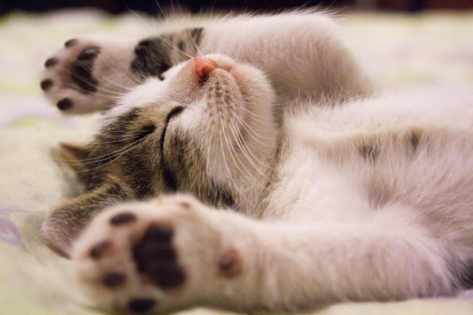 A happy kitten laying on its back.