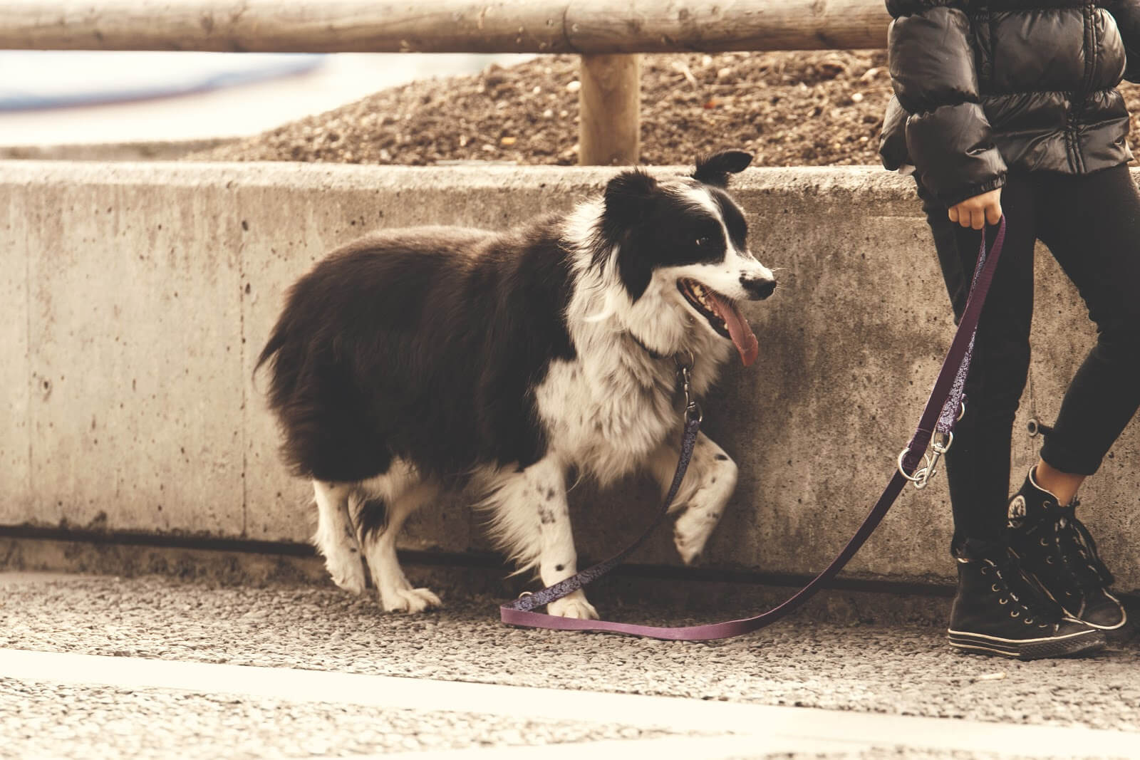 A person takes their adopted dog on a walk.