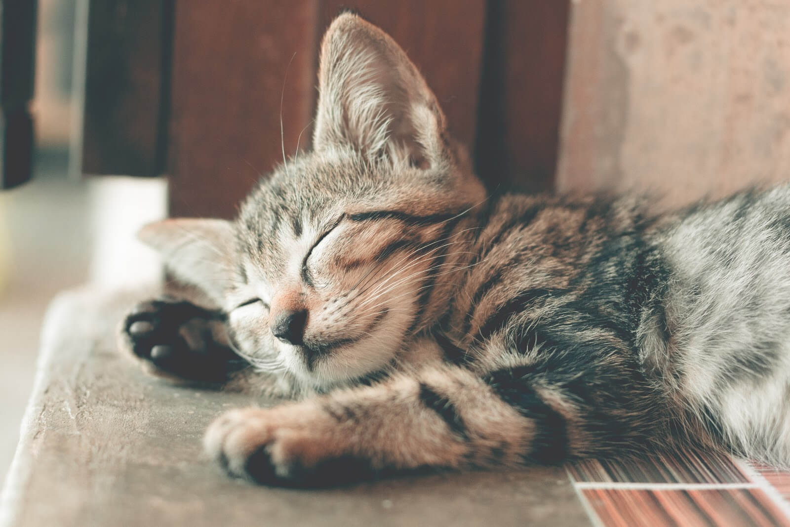 A kitten peacefully sleepng
