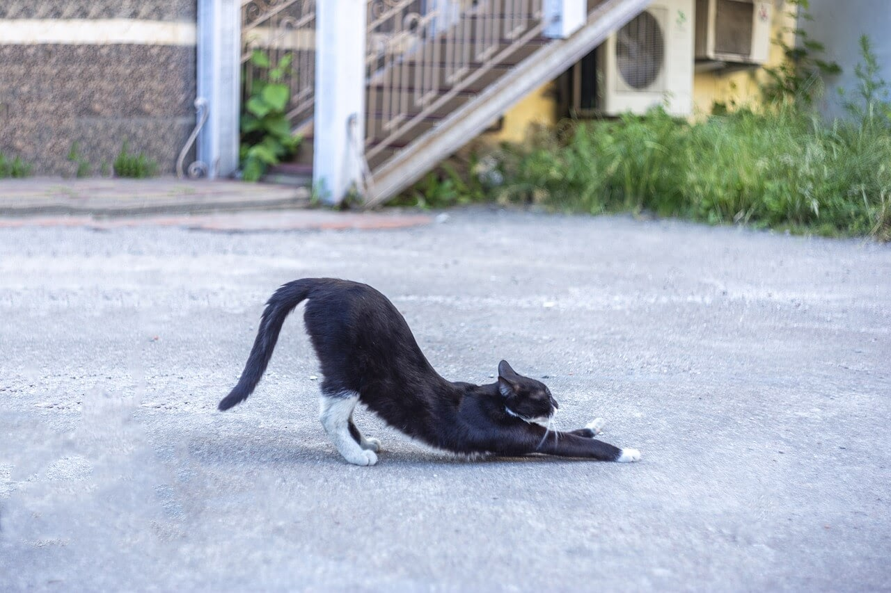 A black cat with a healthy tail stretches outside.