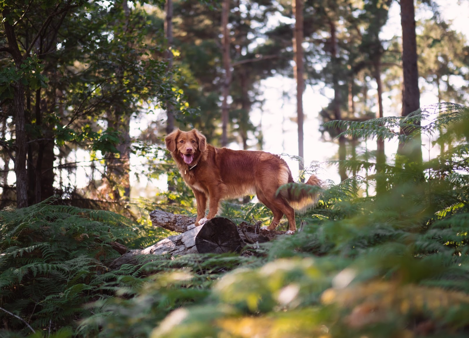 A dog in the woods