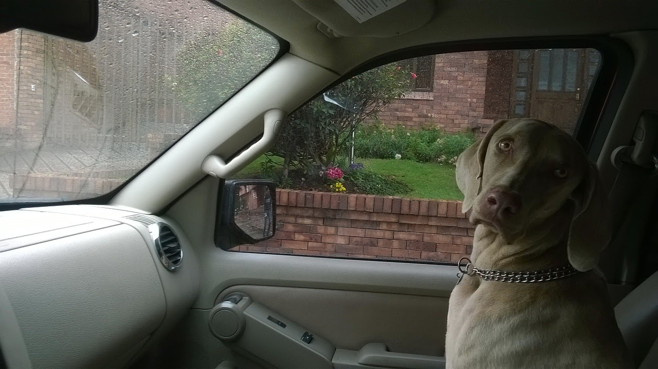 A dog sits in the front seat of a car on a road trip.