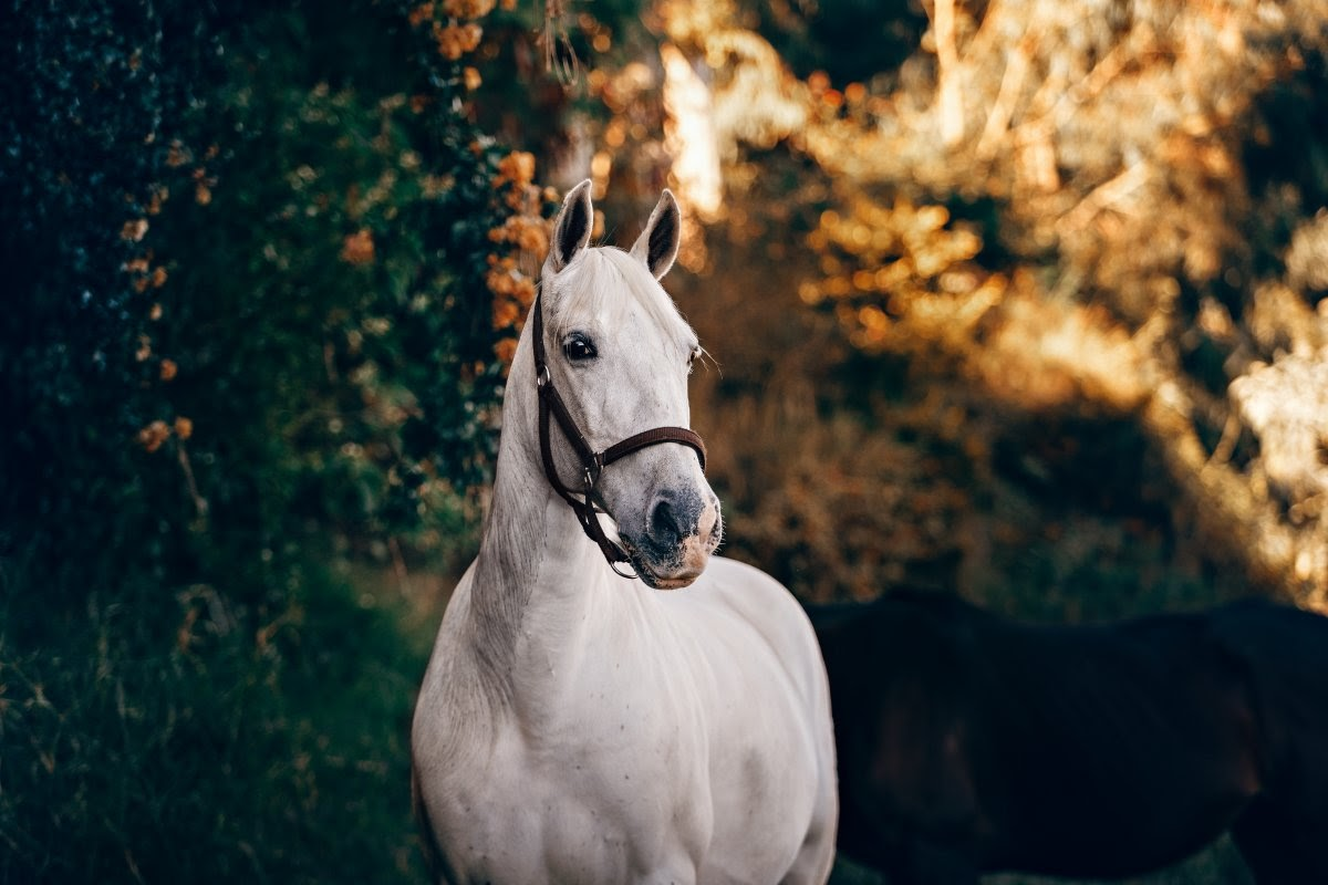 A photo of a white horse that's just been stung by a bee.