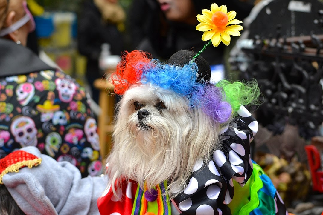 A dog in a clown costumes sits on a Halloween parade float.