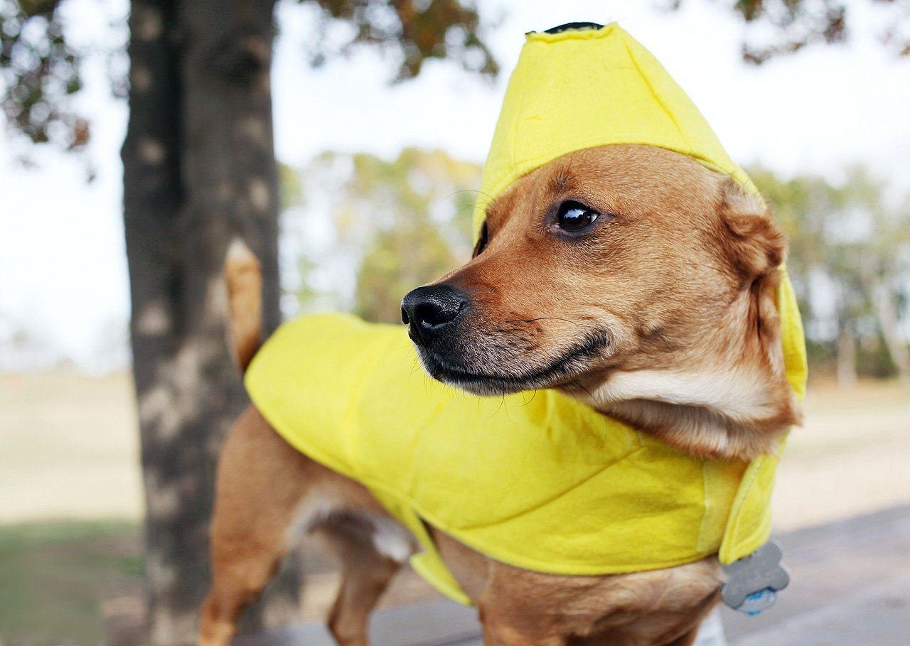 a dog in a yellow banana costume