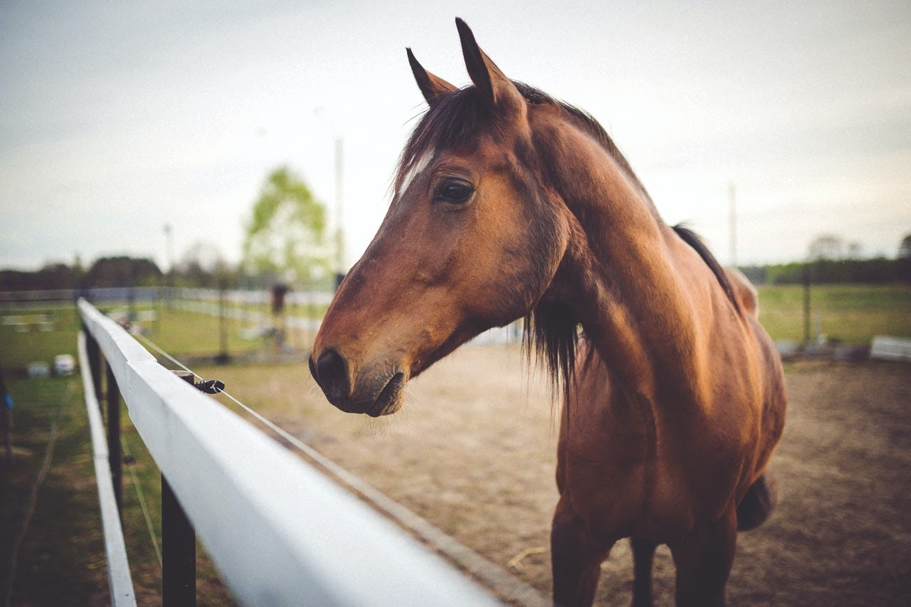 A brown horse standing by the fence
