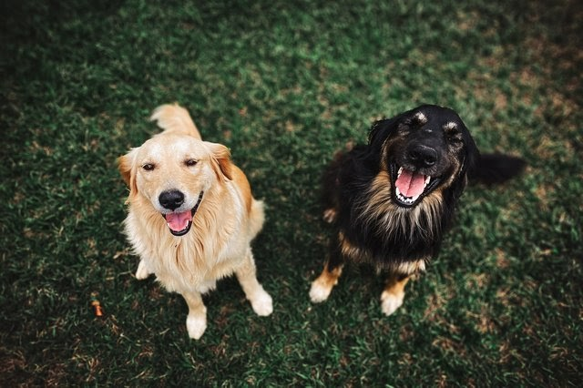 Two happy and smiling dogs
