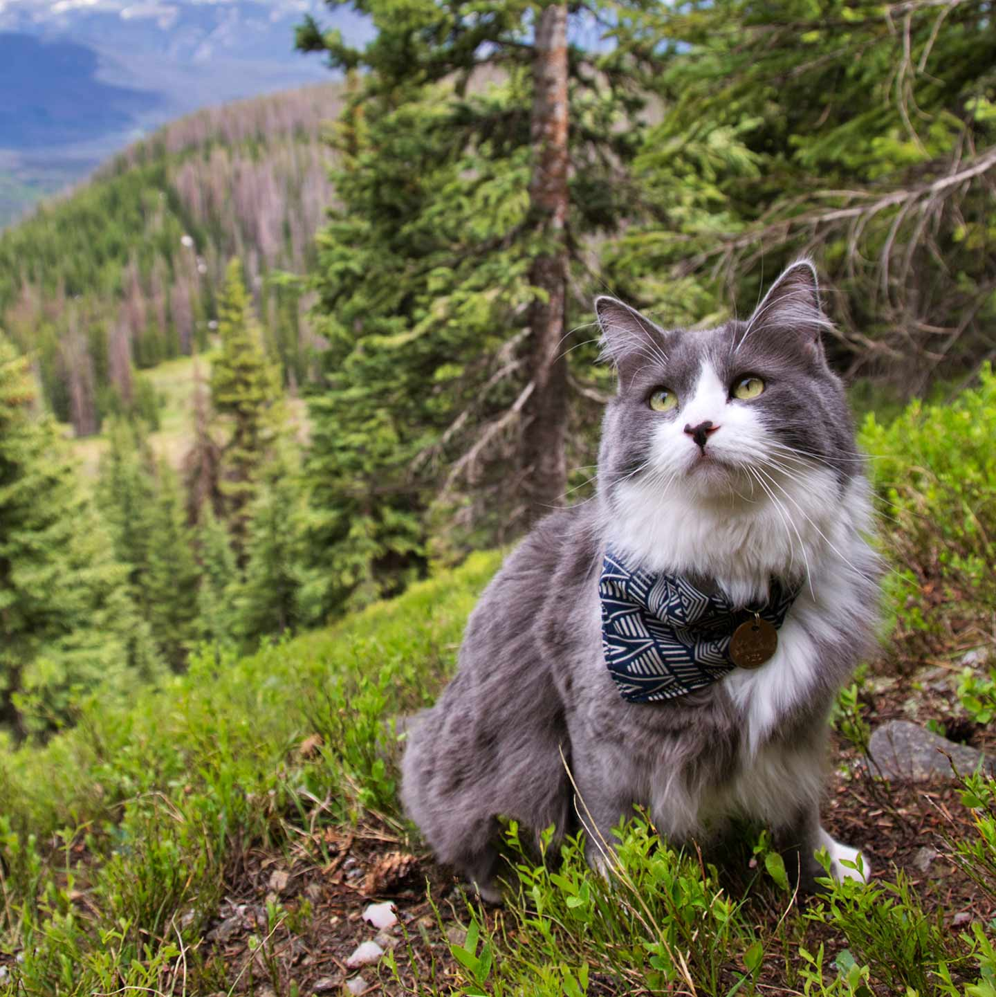 Helpful Tips and Tricks for Taking Your Cat on a Hike