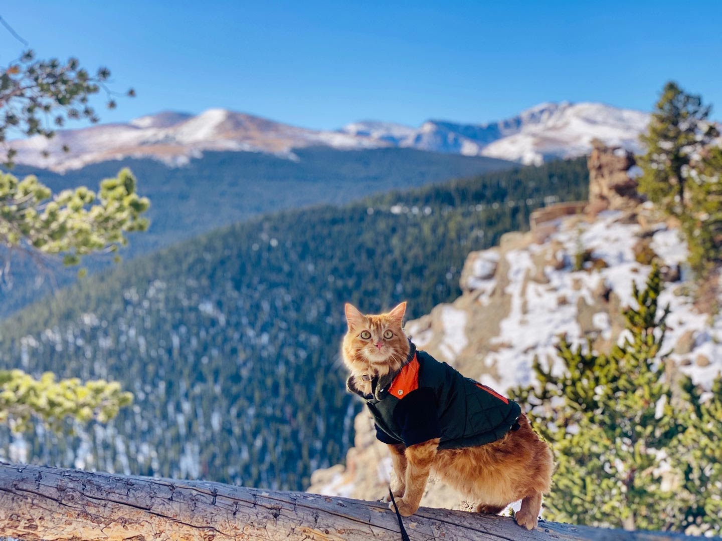 Cat in a jacket with mountains in the background