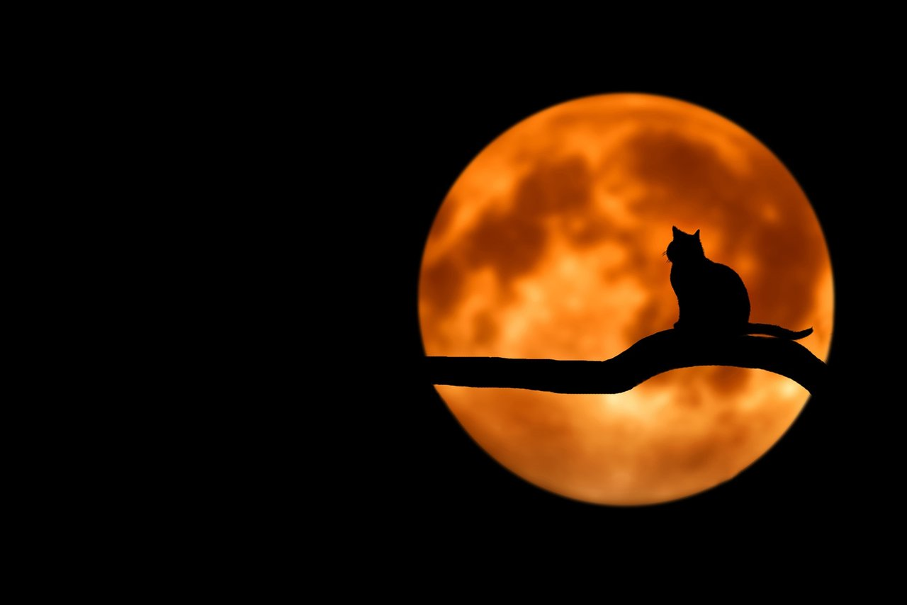 Tips and Tricks for Celebrating Halloween Safely with Your Cat