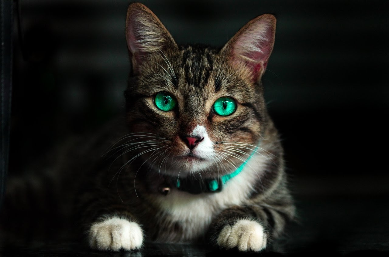 Cat with bright green eyes